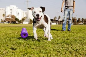 dog training business clients