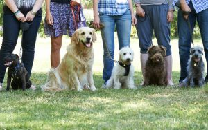 dog training business - classes